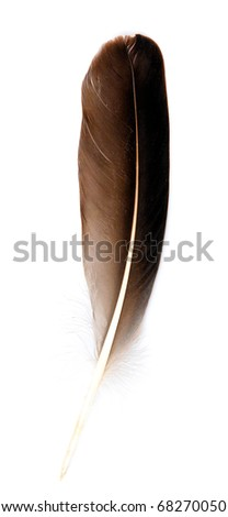 Bird feather design for decorates or as a pen an image isolated on white