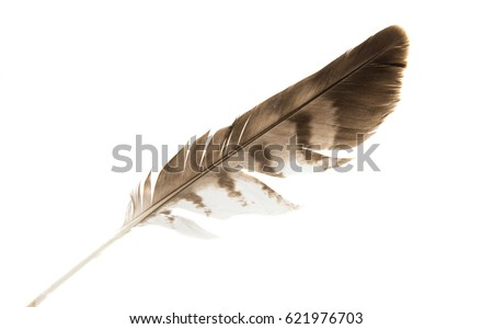 Bird feather isolated on white background #621976703
