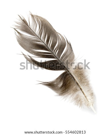 bird feather on white background #554602813