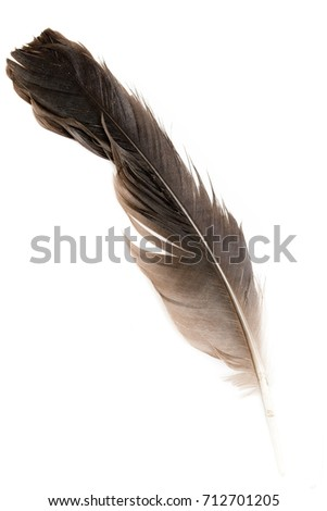bird feather on white background #712701205