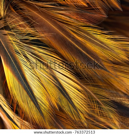 Bird feather pattern for background and texture