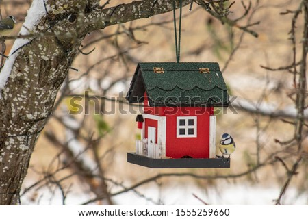 Bird feeder hanging from a tree. Red birdhouse with blue tit during winter in snow. Stockfoto ©
