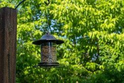 bird feeder hanging from a wooden pole