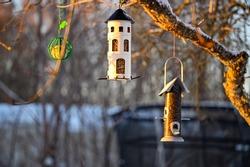 bird feeder hanging from tree in garden