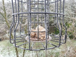 Bird feeder hanging in a garden in winter with frost. Balls of seeds. Nearly empty.