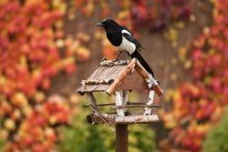 Bird feeder in the autumn garden.