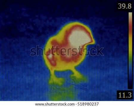 Bird Flu Disease Inspection with Thermal Imaging Infrared Camera