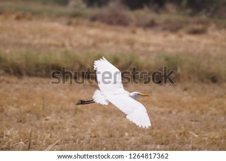 Bird fly pic in field, it's a sign of freedom, bird feel free and searching her food