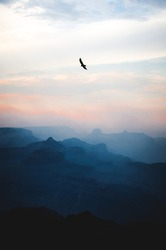 Bird flying above a canyon, either an eagle, hawk, or falcon