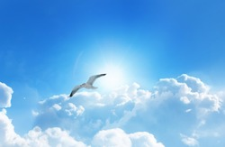 Bird flying above the clouds with a glowing sun and deep blue sky