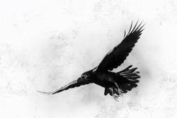 Bird - flying black raven, black and white photography, halloween