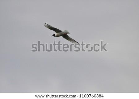 bird flying in alaska #1100760884
