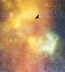 Bird flying in the sky, old vintage photography effect