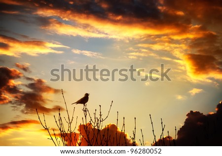Bird flying into the sunset singing against a spectacular sunset
