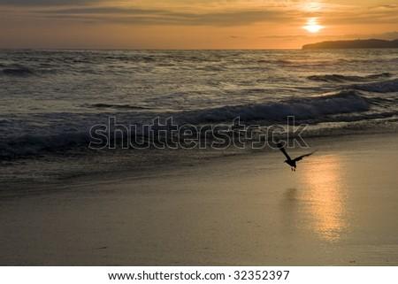 Bird Flying over Beach