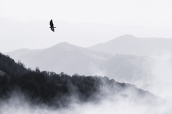 bird flying over misty hills, monochrome nature landscape