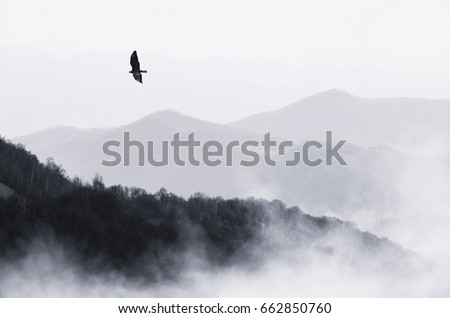 bird flying over misty hills ...