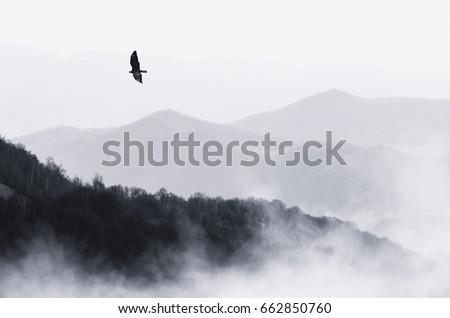 bird flying over misty hills ...