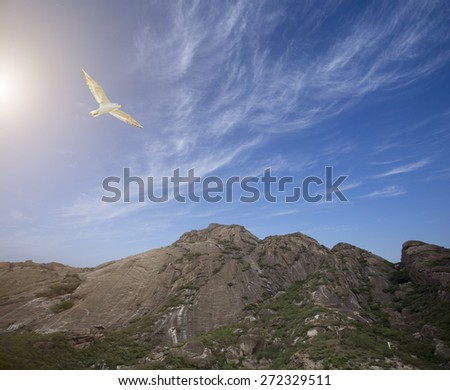bird flying over mountain area in a sunny day
