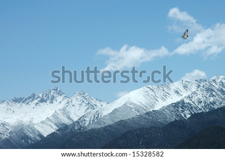 Bird flying over snow mountain
