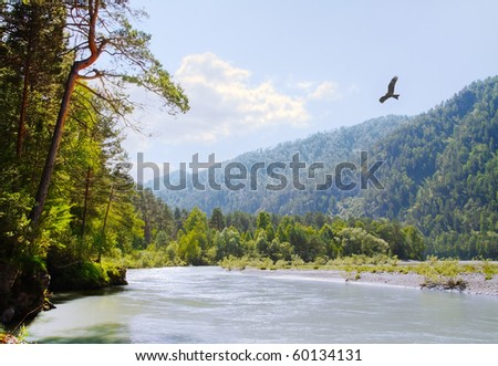 bird flying over the forest and mountain river