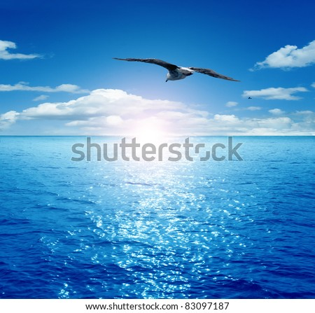 Bird flying past the rising sun. Dawn on the sea. A flying seagull.