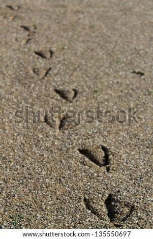 bird footprints on the beach