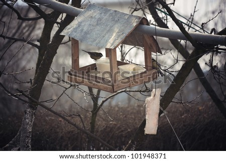 Bird house - feeding birds during the winter