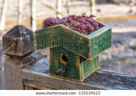 Bird house with living roof of sedum plants