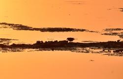 bird hunting prey at dusk after sunset