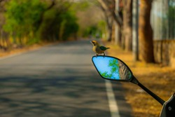 bird in rear-view mirror