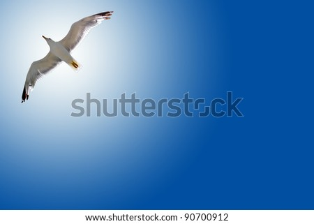 Bird in the air with wings wide open in-front of the sun