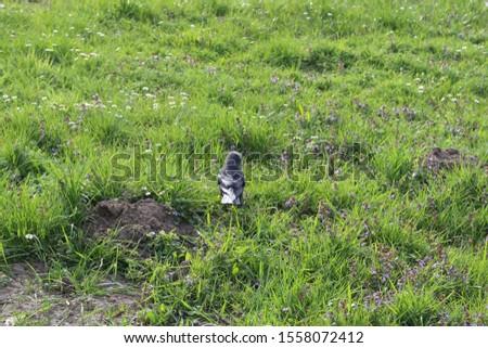 Bird in the grass, Bulwar Wolynski, Kraków, Poland. Zdjęcia stock ©