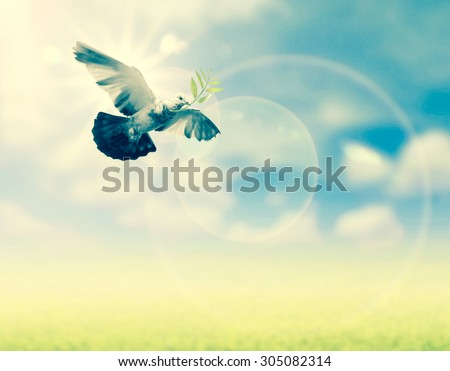 Bird into the air , freedom peace and spirituality concept,art abstract imagination background on nature grass and sun sky