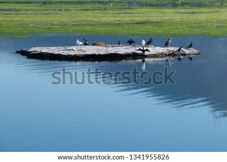 Bird Island At Lagoon Stok fotoğraf ©