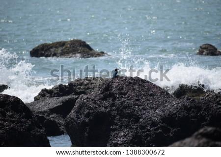bird life near the sea. creative photography to capture life near sea. #1388300672