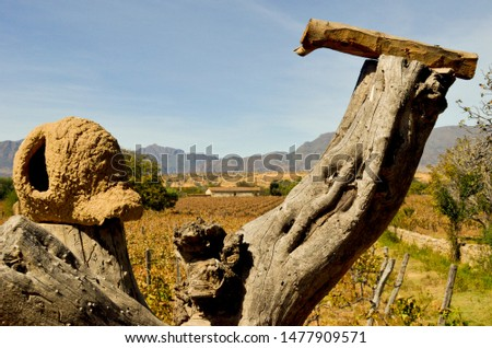 Bird mud nest on a large wooden log and the mountains behind, in Tarija, Bolivia