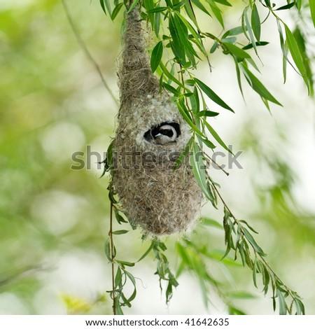 bird nest hanging on branch