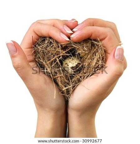Bird nest in hands on a white background