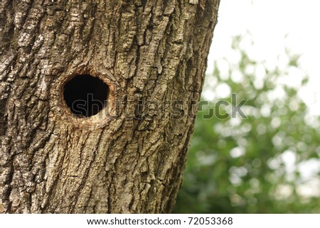Bird nest in hollow tree trunk