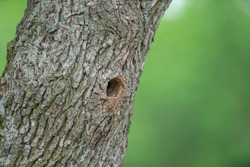 Bird nest in the tree. Hollow in the tree