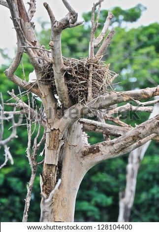bird nest on dried tree