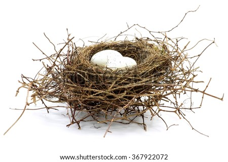 bird nest with two eggs isolated on white background