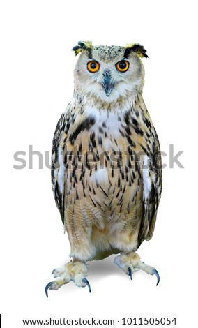 Stock Photo Bird of night, bird of pray, owl isolated on white background. This has clipping path.
