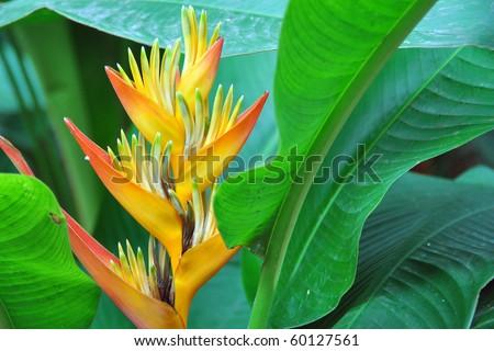bird-of-paradise flower