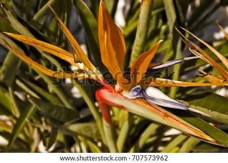 bird of paradise flower #707573962