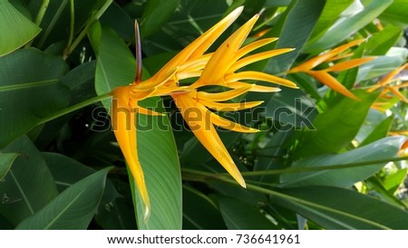 Bird of paradise flower #736641961