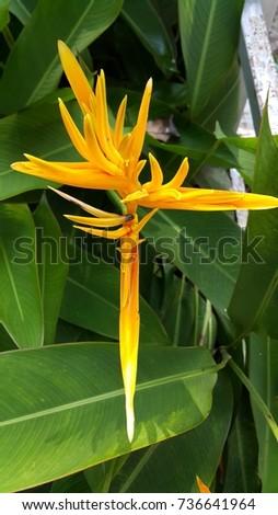 Bird of paradise flower #736641964