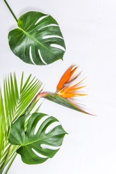 Bird of paradise flower with Monstera leaf ,palm leaves on white background
