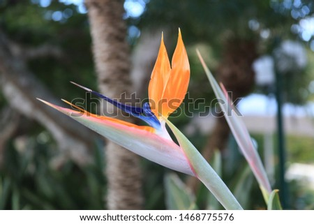 Bird of Paradise in paradise #1468775576